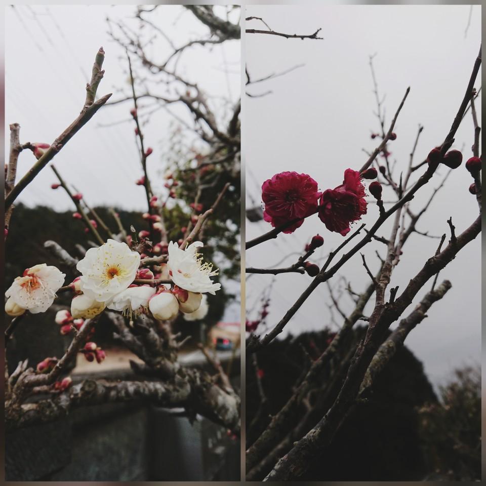 2月14日「木曜☆Fujiyama Sunrise」☆予告編