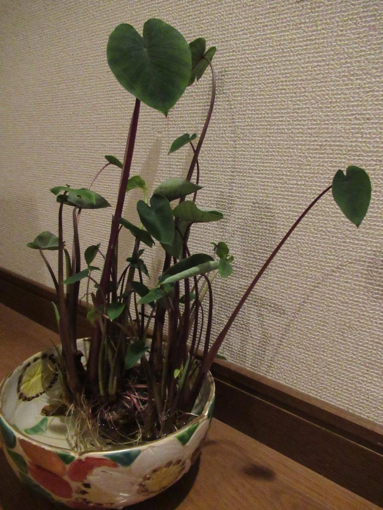 火曜日お昼のFujiyama Sunshine 予告で~す!